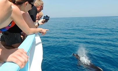 Avistamiento de delfines en Málaga